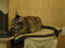 Cats of Neco Republic, #0499