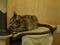 Cats of Neco Republic, #0500