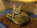 Cats of Neco Republic, #0501