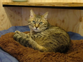 Cats of Neco Republic, #0502
