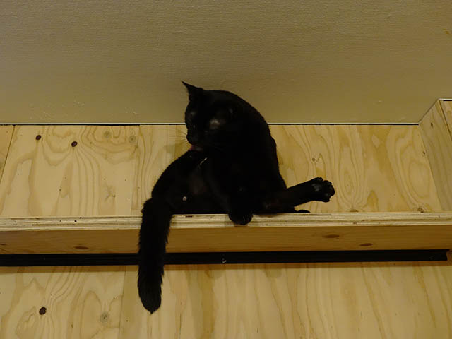 Cats of Neco Republic, #0504
