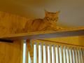 Cats of Neco Republic, #0506