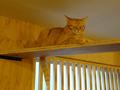 Cats of Neco Republic, #0507