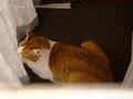 Cats of Neco Republic, #0508