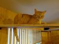 Cats of Neco Republic, #0510