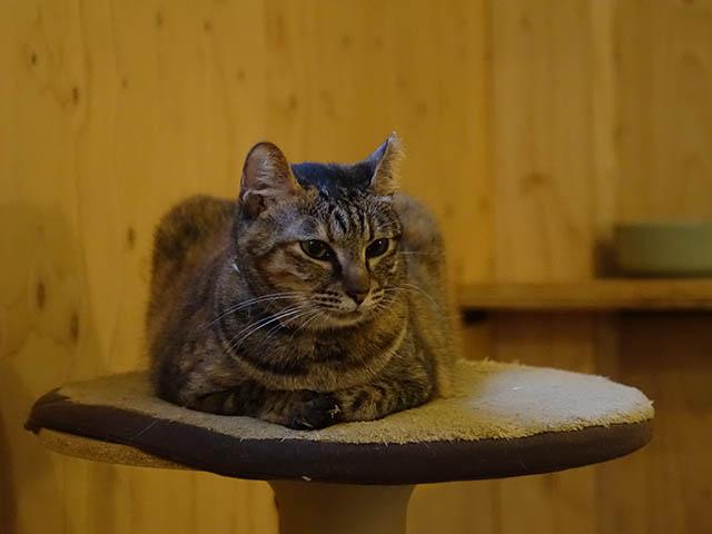 Cats of Neco Republic, #0511