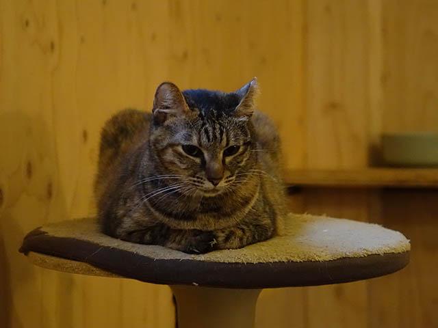 Cats of Neco Republic, #0512