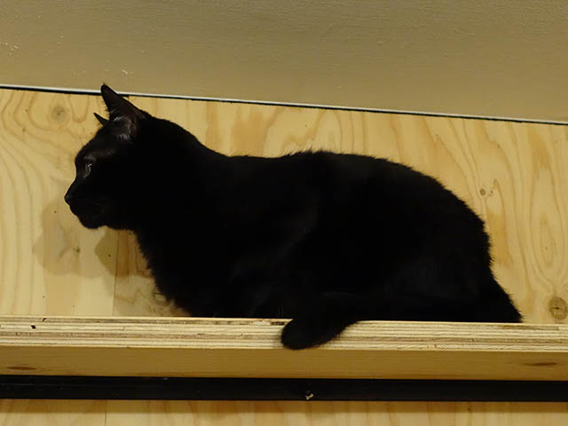 Cats of Neco Republic, #0513
