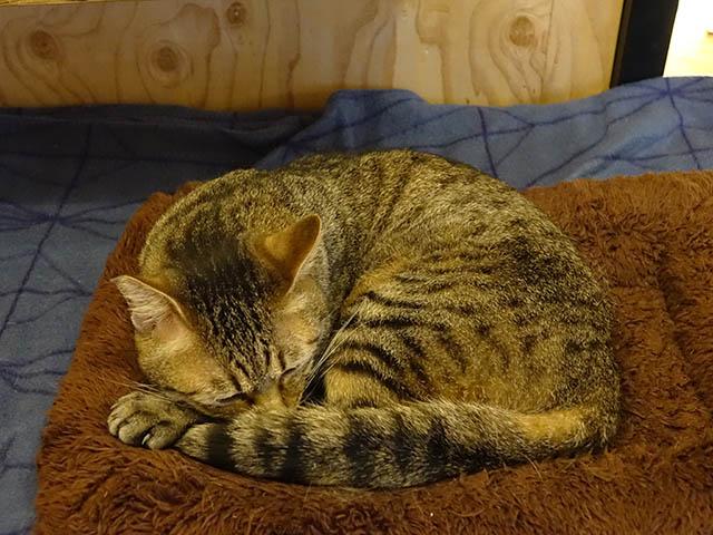 Cats of Neco Republic, #0514