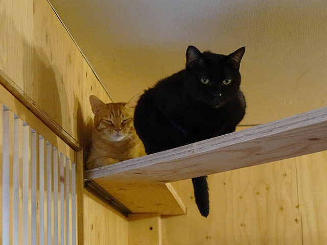 Cats of Neco Republic, #0516