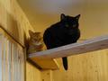 Cats of Neco Republic, #0517