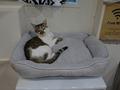 Cats of Neco Republic, #0520