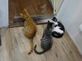 Cats of Neco Republic, #0521