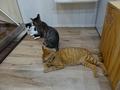 Cats of Neco Republic, #0522