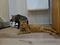 Cats of Neco Republic, #0523