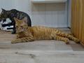 Cats of Neco Republic, #0524