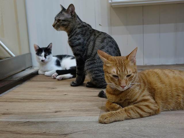 Cats of Neco Republic, #0525