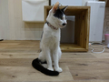 Cats of Neco Republic, #0527