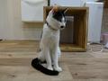 Cats of Neco Republic, #0528