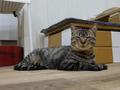 Cats of Neco Republic, #0531