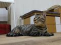 Cats of Neco Republic, #0532