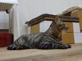 Cats of Neco Republic, #0533