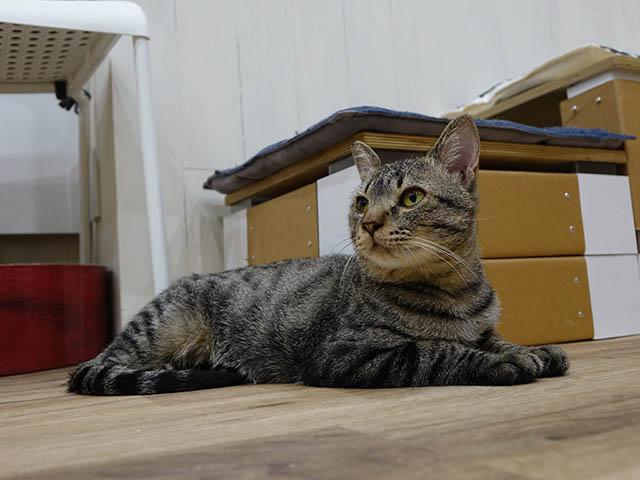 Cats of Neco Republic, #0534