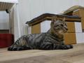 Cats of Neco Republic, #0535