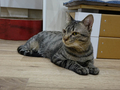 Cats of Neco Republic, #0537