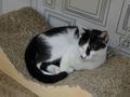 Cats of Neco Republic, #0538