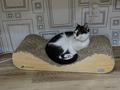 Cats of Neco Republic, #0542