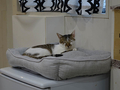 Cats of Neco Republic, #0543