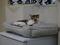 Cats of Neco Republic, #0544