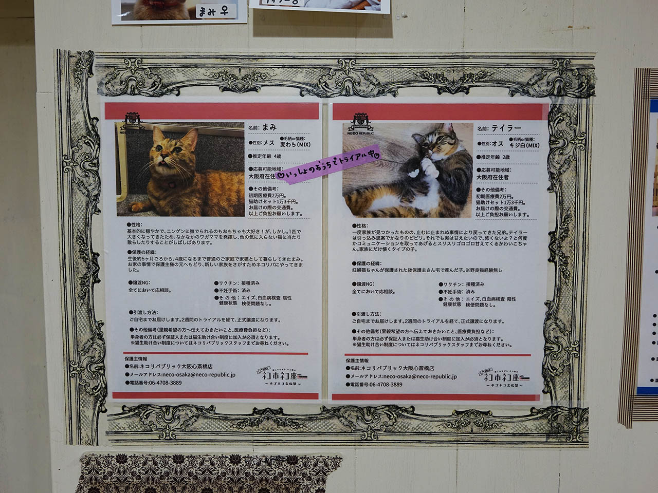 Cats of Neco Republic, #0546