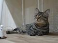 Cats of Neco Republic, #0548