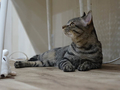 Cats of Neco Republic, #0549