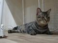 Cats of Neco Republic, #0550