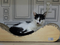 Cats of Neco Republic, #0551