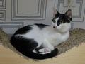 Cats of Neco Republic, #0554