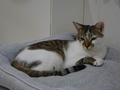 Cats of Neco Republic, #0555