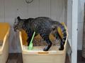 Cats of Neco Republic, #0556
