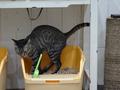 Cats of Neco Republic, #0557