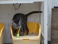Cats of Neco Republic, #0558