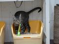 Cats of Neco Republic, #0559