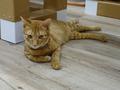 Cats of Neco Republic, #0561