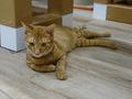 Cats of Neco Republic, #0562