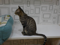 Cats of Neco Republic, #0563