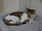 Cats of Neco Republic, #0564