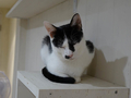 Cats of Neco Republic, #0566