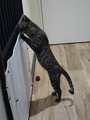 Cats of Neco Republic, #0569